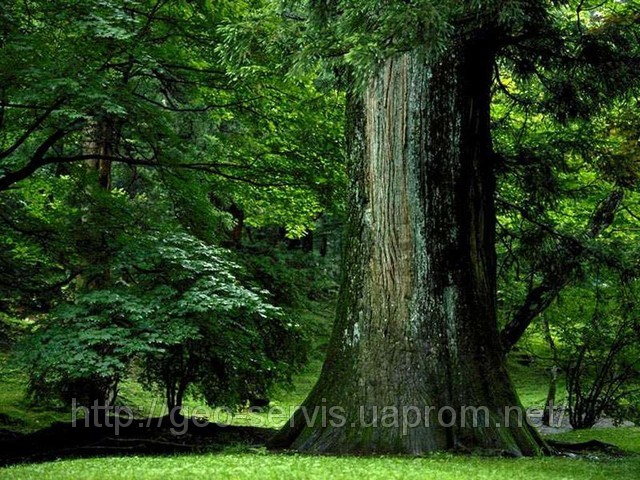 pica4u.ru_1201978288frame_it_like_a_tree_by_x_horizon (640x480, 138Kb)