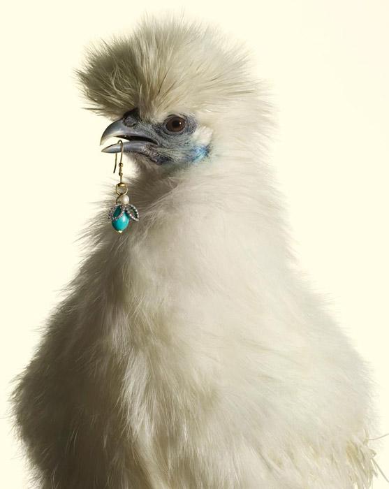 Luxury-Chicks-2 (557x700, 76Kb)