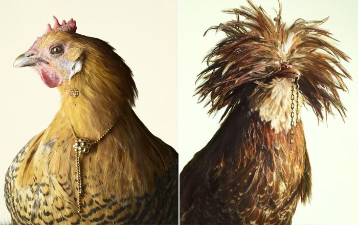 luxury-chicks-peter-lippmann-1 (700x439, 125Kb)