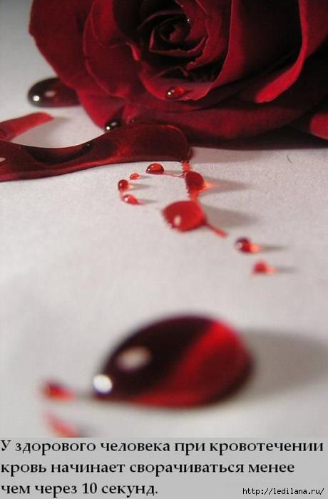кровь (460x700, 132Kb)