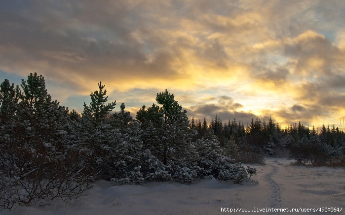Зима в тайге фото 10