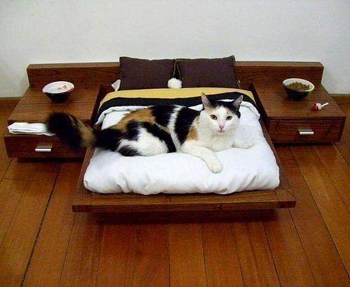 для кошки (500x410, 35Kb)