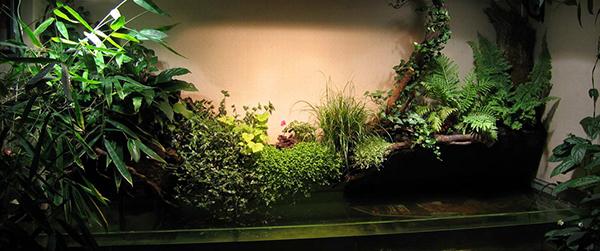 Растения самое интересное в блогах