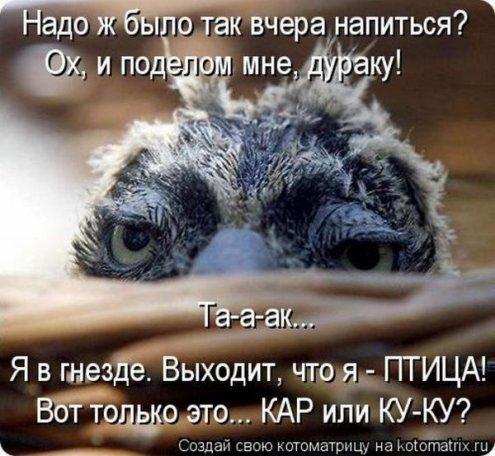 4326608_1338793328_kotomav4 (495x456, 55Kb)