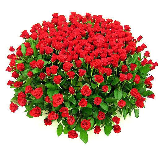 http://img0.liveinternet.ru/images/attach/c/6/90/618/90618742_0_A_BUKET_ROZ_KRASIVUYY_BOLSHOY.jpg