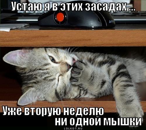 ni-odnoy-myshki_1333341117 (500x444, 84Kb)