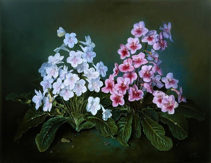CAPE PRIMROSES 51x66 cms Oil on canvas 1998 (700x542, 99Kb)