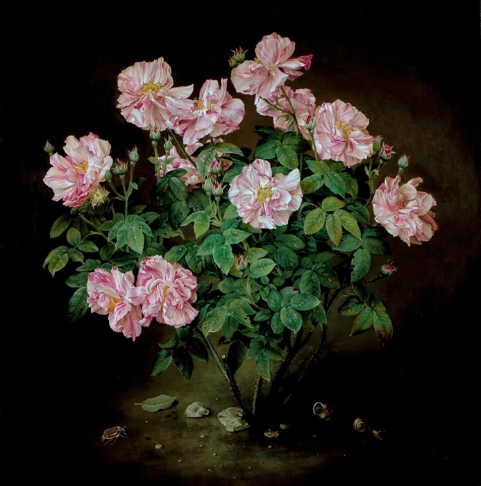 PINK AND WHITE STRIPED ROSE BUSH 61x61 cms oil on canvas 1996 (693x700, 267Kb)