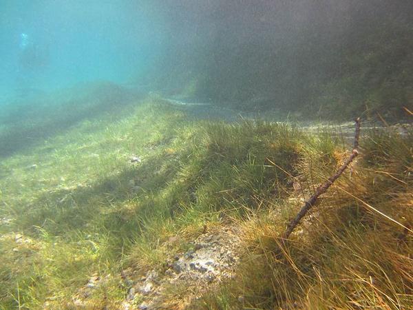 underwater park 6 (600x450, 51Kb)