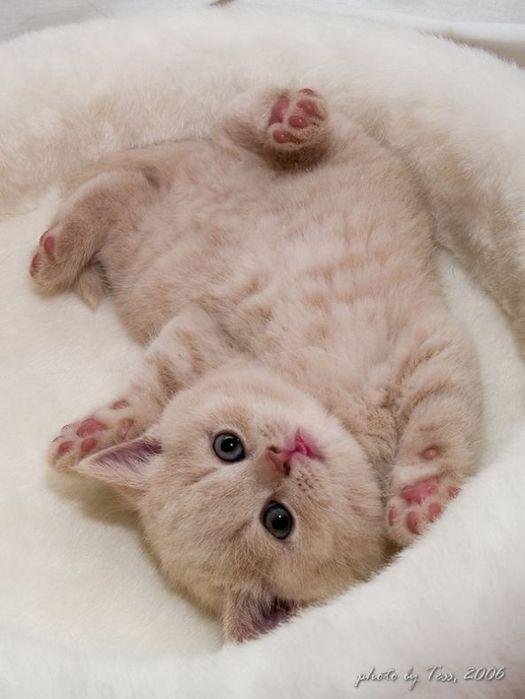 приколы про кошек онлайн:
