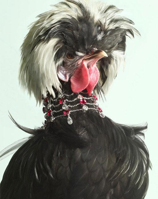 Luxury Chicks гламурные курицы фото (557x700, 79Kb)