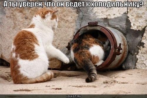 kuda-vedet-tonnel_1276277765 (500x333, 142Kb)