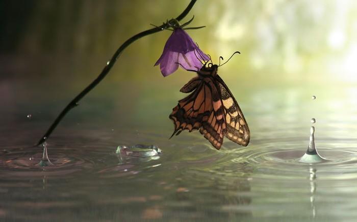 бабочка фото 1 (700x437, 45Kb)
