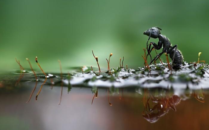 муравей фото 1 (700x437, 42Kb)