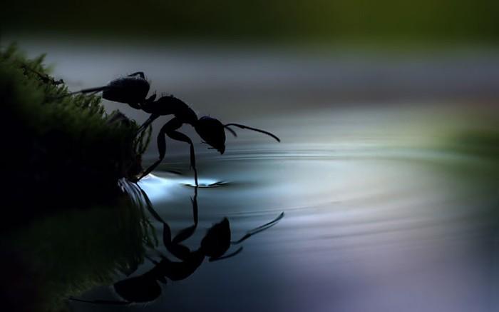 муравей фото 3 (700x437, 30Kb)