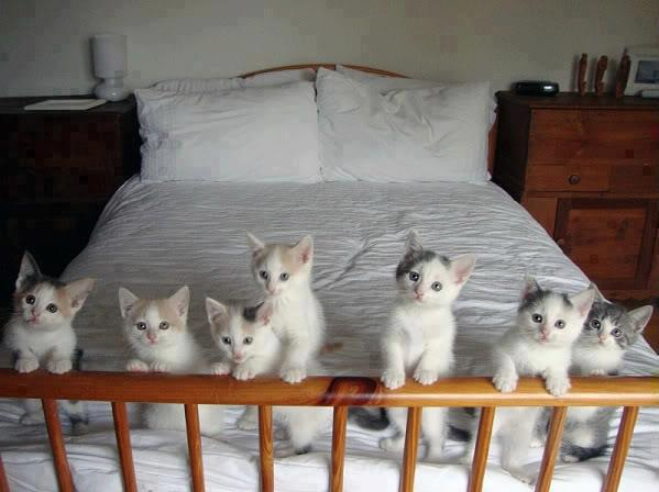 katin?liai (599x448, 34Kb)