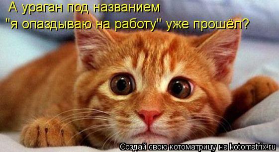 kotomatritsa_9- (561x306, 36Kb)