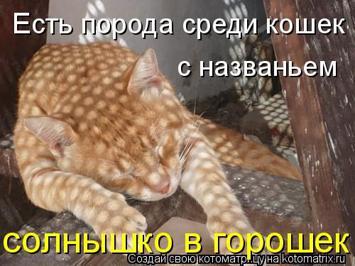 kotomatritsa_G (500x375, 44Kb)