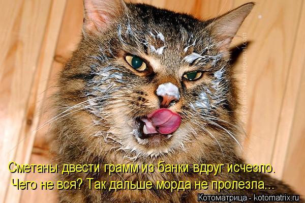 kotomatritsa_Ir (600x399, 65Kb)