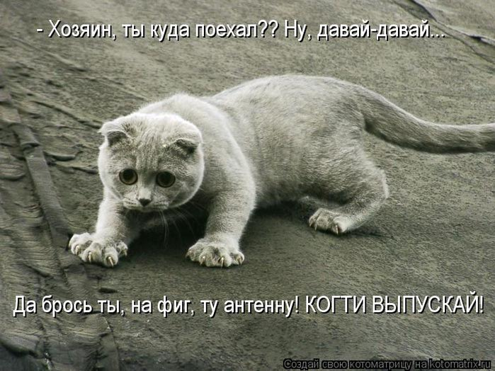 kotomatritsa_l (700x524, 81Kb)