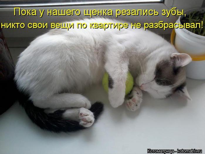 kotomatritsa_RP (700x524, 47Kb)