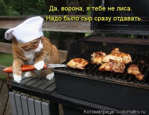 kotomatritsa_XK (480x371, 33Kb)