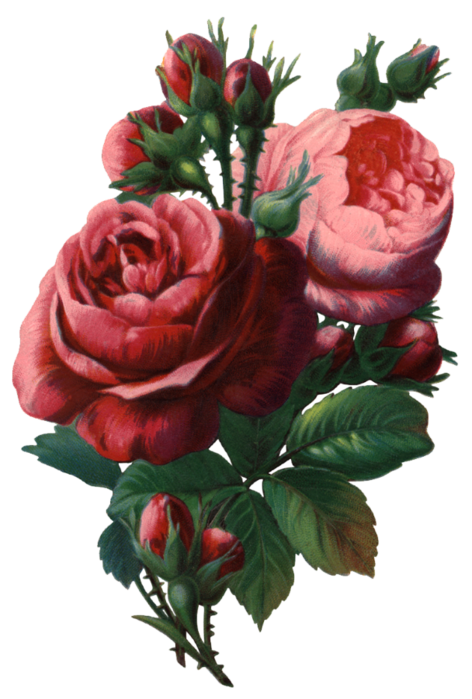 Valley_of_Roses_emb_011 (472x700, 419Kb)