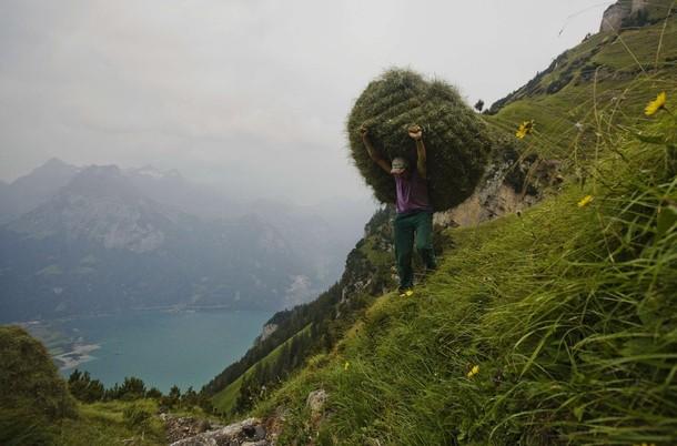 Дикий сенокос близ швейцарской деревни Флюелен, 20 августа 2012 года