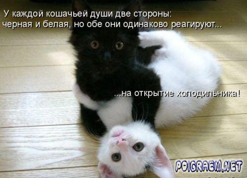 1311622239_poigraem.net1 (500x360, 36Kb)