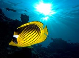 fish-300x223 (300x223, 16Kb)