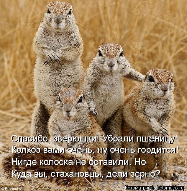 4326608_kotomatritsa_Q (634x645, 113Kb)