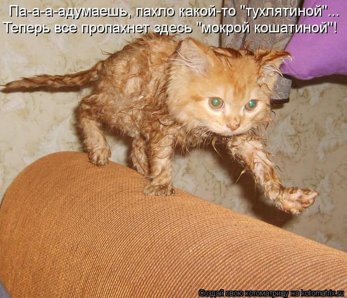 4326608_kotomatritsa_2R (700x601, 86Kb)