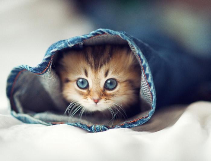 Daisy_kitten_1-720x552 (700x536, 65Kb)