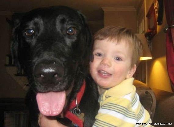 собака и ребенок (570x414, 35Kb)