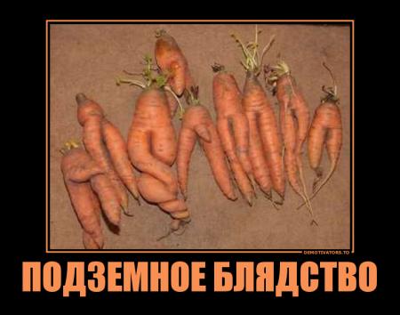 1337026829_11 (450x354, 151Kb)