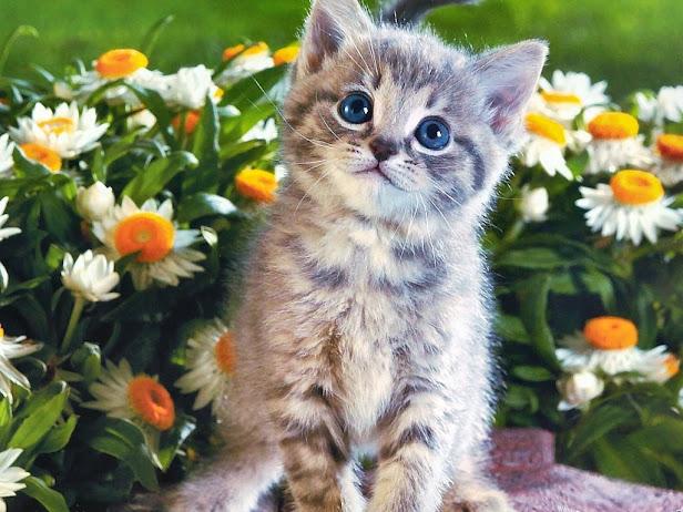 Котенок ... (616x462, 107Kb)