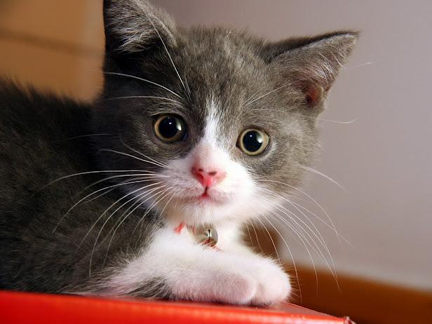 Трогательный котенок ... (616x462, 80Kb)