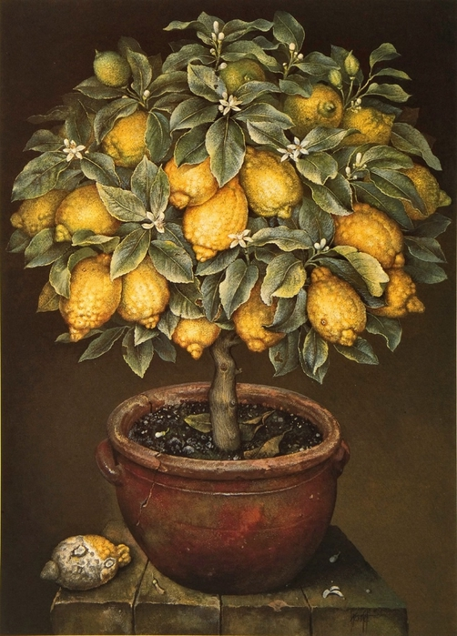 LEMON TREE IN BLOSSOM IN TERRACOTTA POT 86x61cmsGouache1989 (502x700, 295Kb)