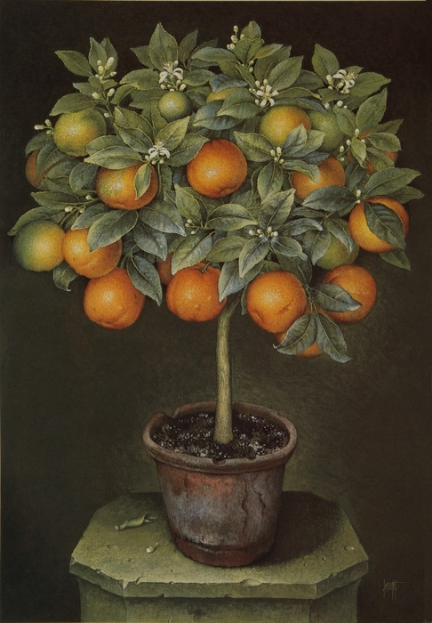 ORANGE TREE IN BLOSSOM IN TERRACOTTA POT86x61Gouache1989 (486x700, 252Kb)