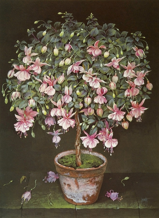 PALE PINK FUSCHIA TREE 76x56cms Gouache on1990 (511x700, 309Kb)