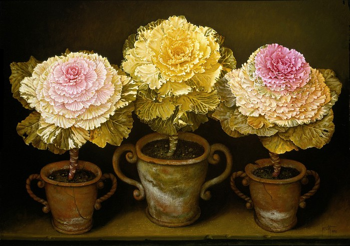 POTTED ORNAMENTAL CABBAGES 66x91 cms oil on canvas 1993(1) (700x491, 110Kb)