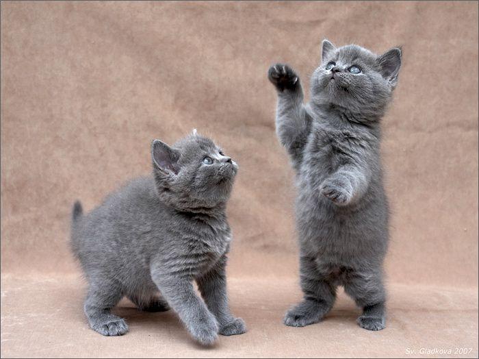 kittens_01 (700x524, 55Kb)