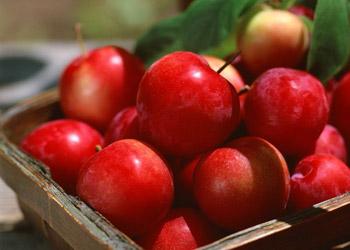 ябл (350x250, 25Kb)