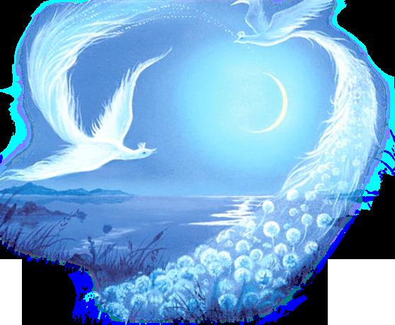 анатоль разделитель птицы ночь.............. (558x459, 394Kb)