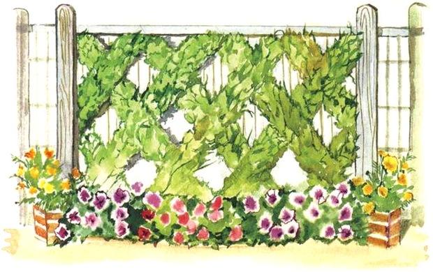 каким растением украсить бетонный забор