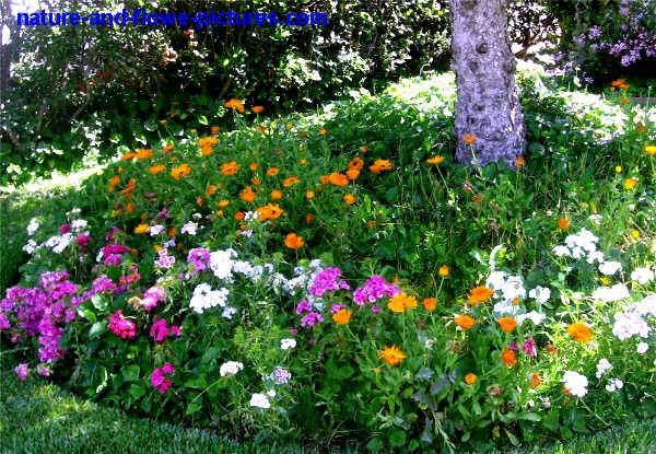 Какие цветы посадить на даче в тени