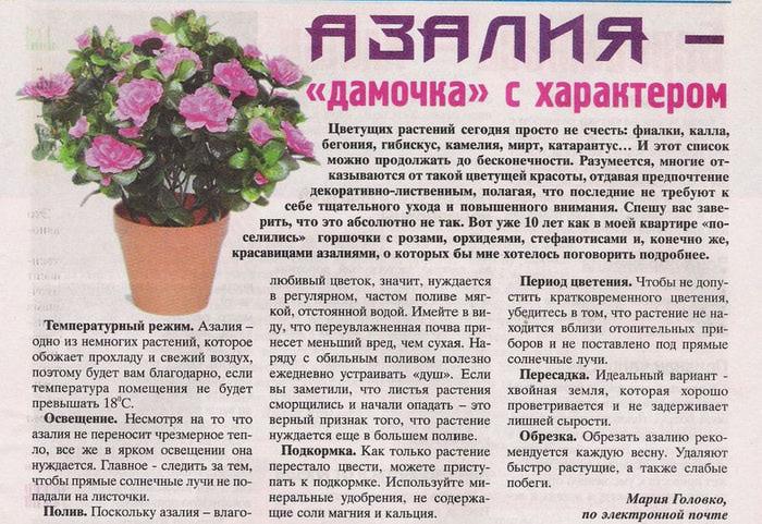 podelis-sovetom-6-2012 (700x481, 133Kb)