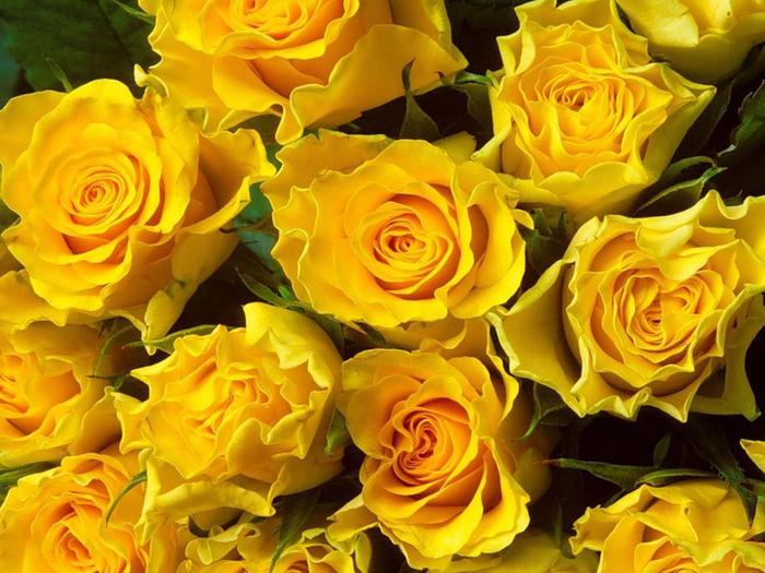 желтая роза (700x525, 120Kb)