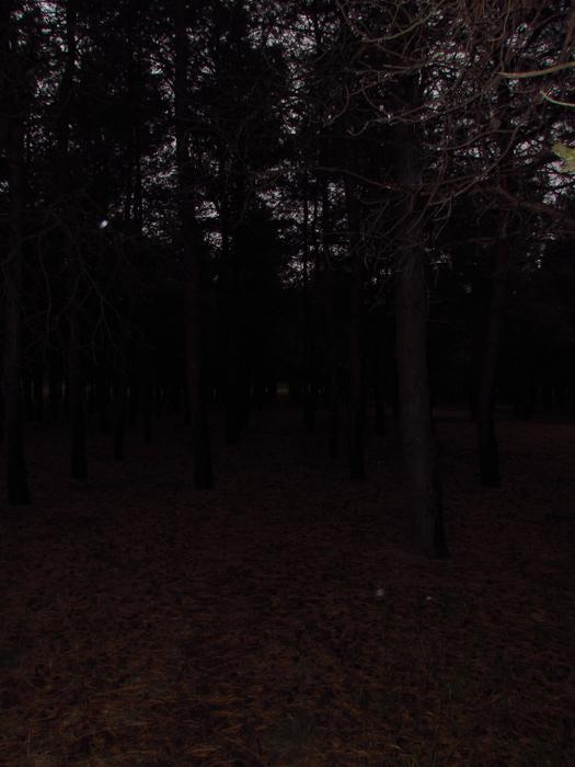 IMG_0164 (525x700, 397Kb)