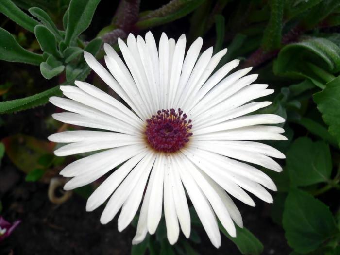Название цветков с картинками 5